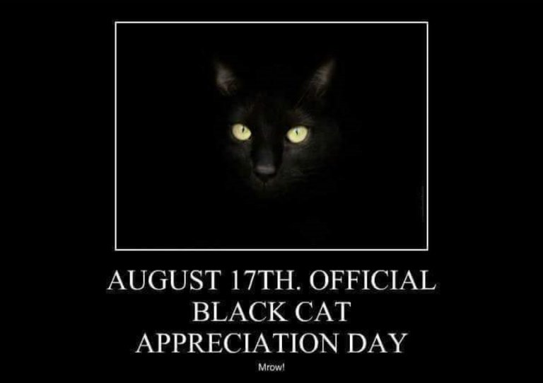EVERY day is Black Cat Appreciation Day here!!    #blackcats #blackcatappreciationday #CatsOfTwitter  #crazycatlady #crazycatladiesunite<br>http://pic.twitter.com/dvWMRe1Cq4