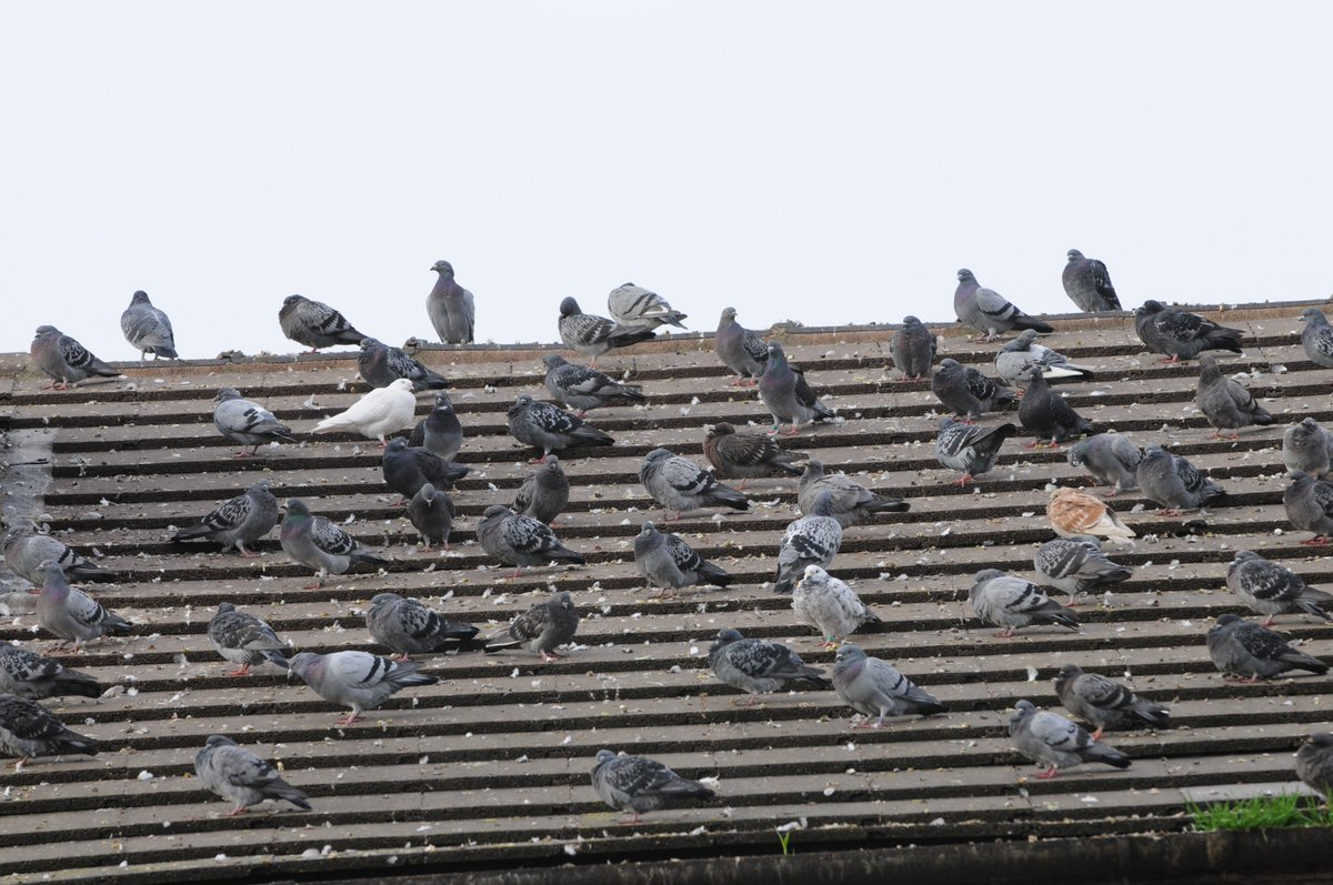 With a #ProvenRecord of solving #BirdProblems in an #EcoFriendly manner we are THE company to solve your #PestBirds #Pigeons #Gulls problems<br>http://pic.twitter.com/Ob0kh7ZOHr