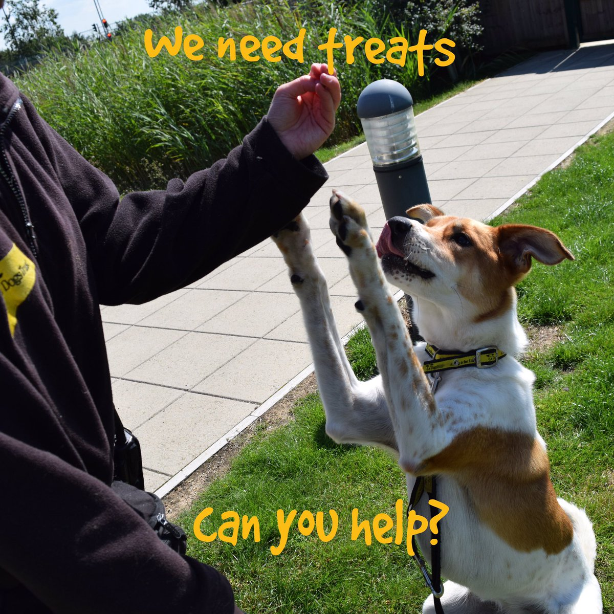 We are in desperate need of donations of treats! Can you help?   https://www. amazon.co.uk/gp/aw/ls/ref=/ 260-7011273-5080452?ie=UTF8&amp;%2AVersion%2A=1&amp;%2Aentries%2A=0&amp;lid=1ERT7NG8EZQZB&amp;ty=wishlist &nbsp; …  @dogstrust #PlzRT #donate #charity #giving <br>http://pic.twitter.com/nfy53mKDjo