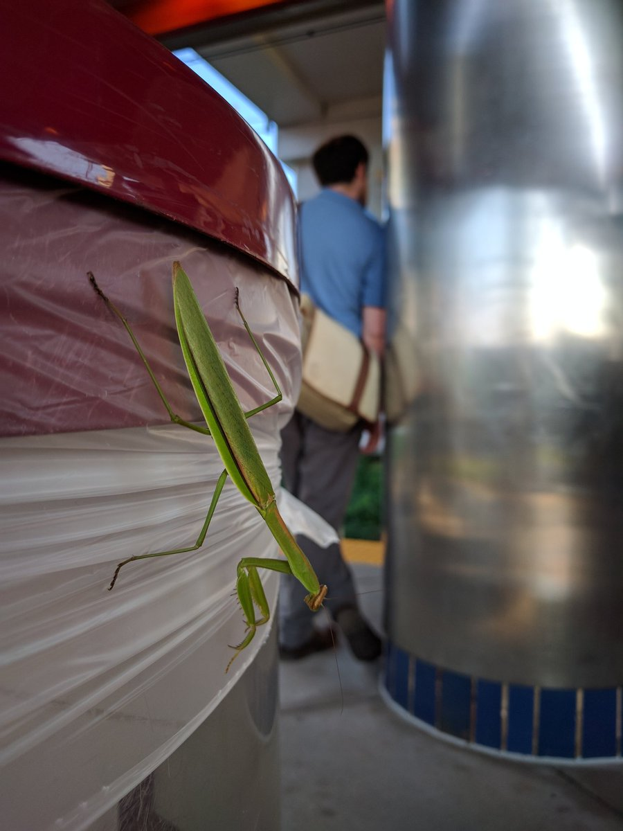 I pointed out this #mantis to a fellow #septa #commuter. Response: &quot;Thanks for showing me.&quot; #unexpected #caring<br>http://pic.twitter.com/FFh6hwtIvm
