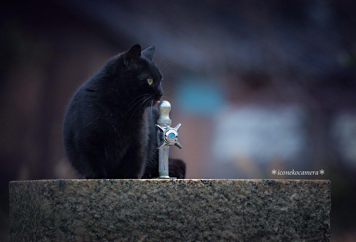 #黒猫感謝の日黒猫の良さを知ってもらうために制定された日なのですね。今日初めて知りました。私の知っている黒猫さん達は皆とても賢く、優しい子達です☺️ pic.twitter.com/Qcvt8VGuPv