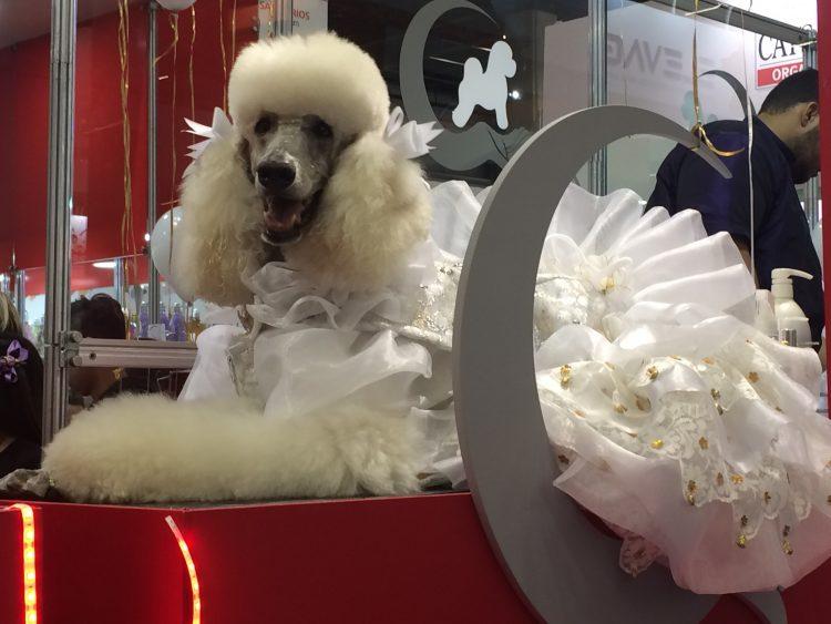 Novidades do mercado pet vão de roupinhas e produtos para banho a equipamentos veterinários; veja. https://t.co/WCBLQQ9iKw