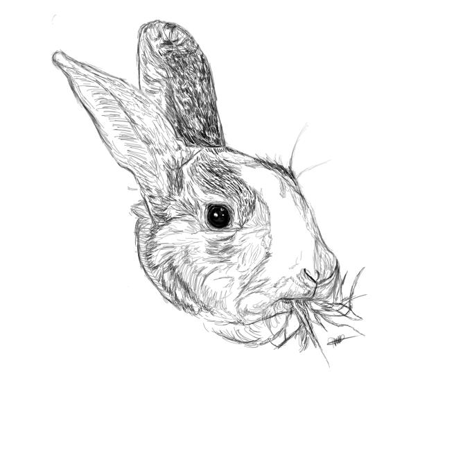 The start of my latest pet portrait request #art #artist #ArtOfTheDay #rabbits #pets #petportrait #portrait #drawing #painting #digitalart<br>http://pic.twitter.com/GEaJfWNwOV
