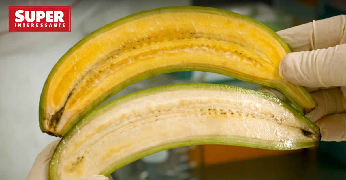 Cientistas criam banana transgênica: https://t.co/7yTZznmYey