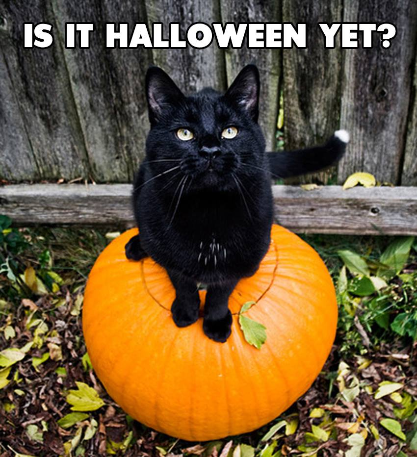 Only 75 days until #Halloween! #BlackCatAppreciationDay https://t.co/9...