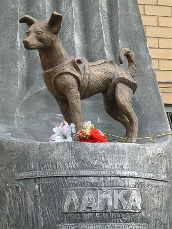 Sarah Gorman On Twitter Here Is Laika The Soviet Dog Who Went