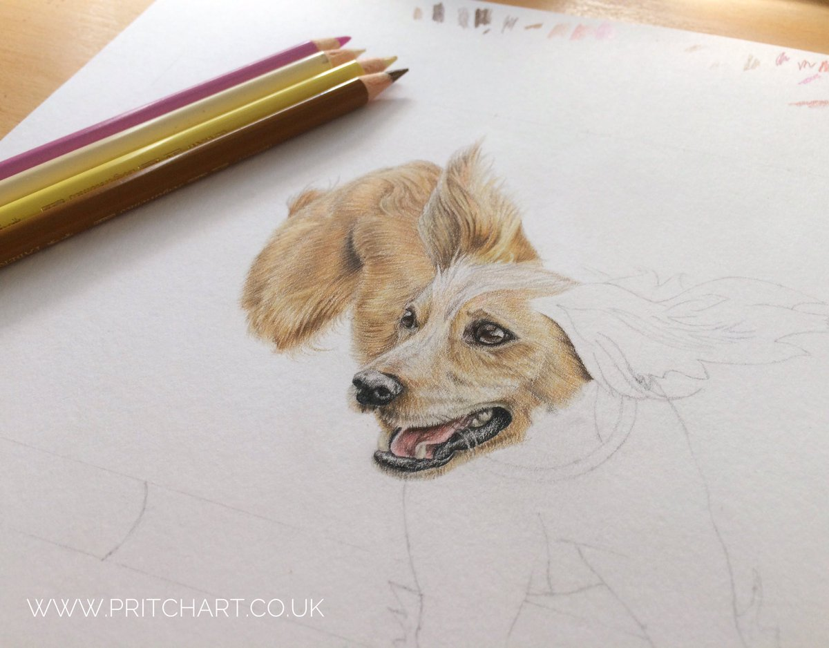 I&#39;ve been working on Lacey&#39;s gorgeous little face today  #dog #portrait #wip #petportrait #colouredpencil #art<br>http://pic.twitter.com/Vuy6IAq80y