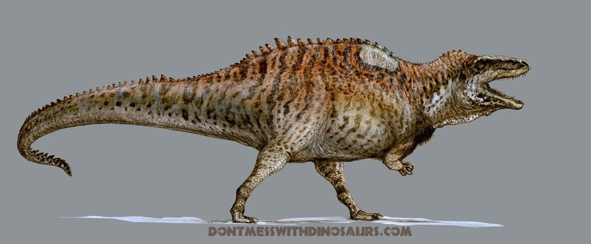 Image result for acrocanthosaurus