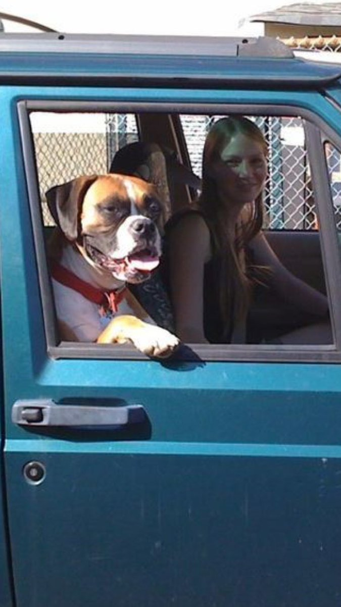 A wonderful memory of me and Sparta on the way to the dog park #boxers #boxerdogs #rainbowbridge<br>http://pic.twitter.com/FzVLQ8sDWJ