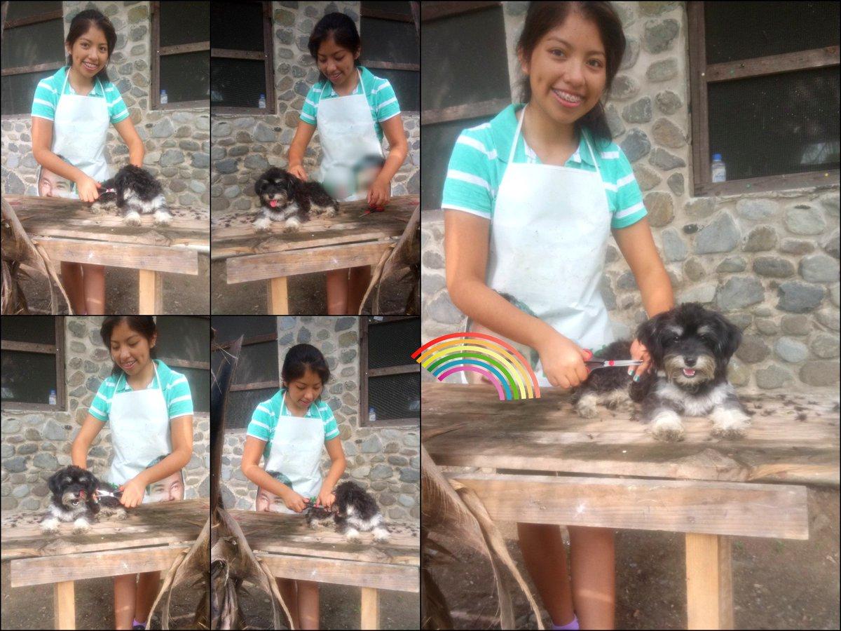 Raven   #cortedepelo #Dog<br>http://pic.twitter.com/pPjBccnFjj