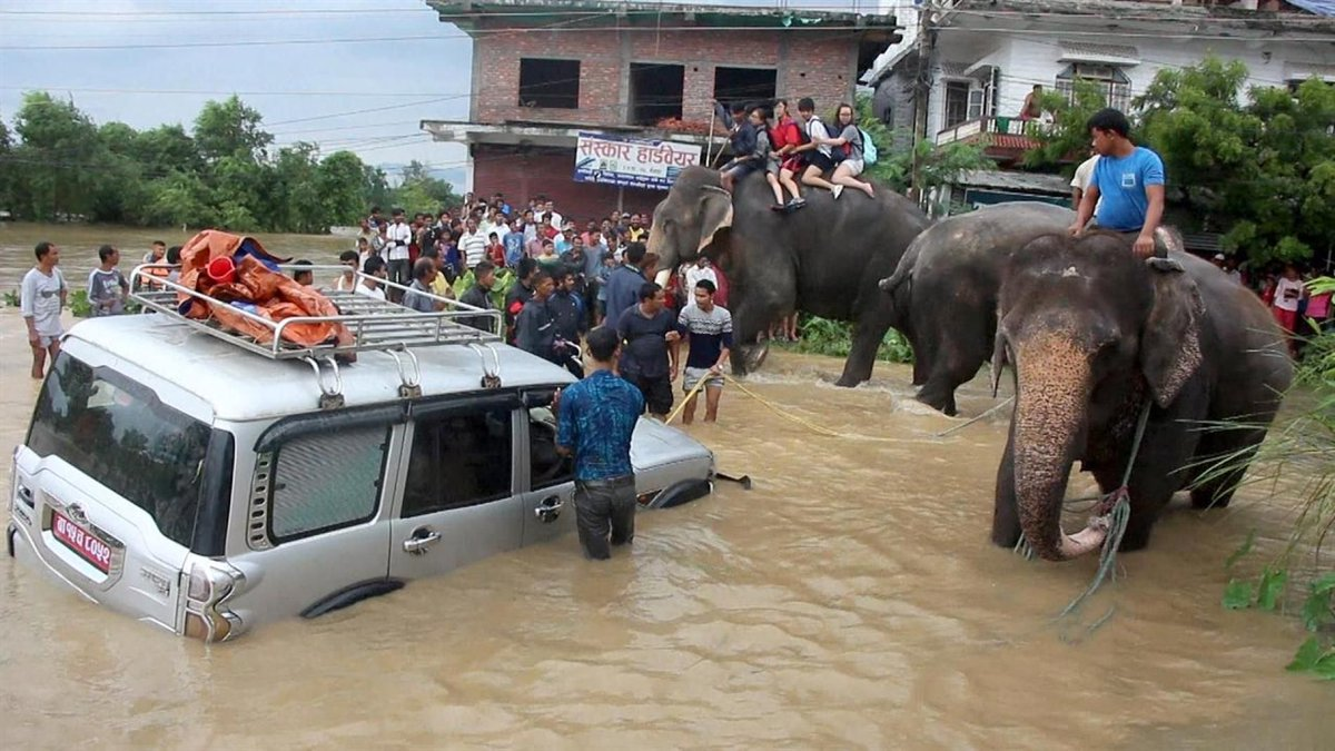 Elephants Rescue Hundreds of People From Floods  https:// buff.ly/2wfqkPk  &nbsp;   #nepal #flood<br>http://pic.twitter.com/79Uf2Fm7Zz