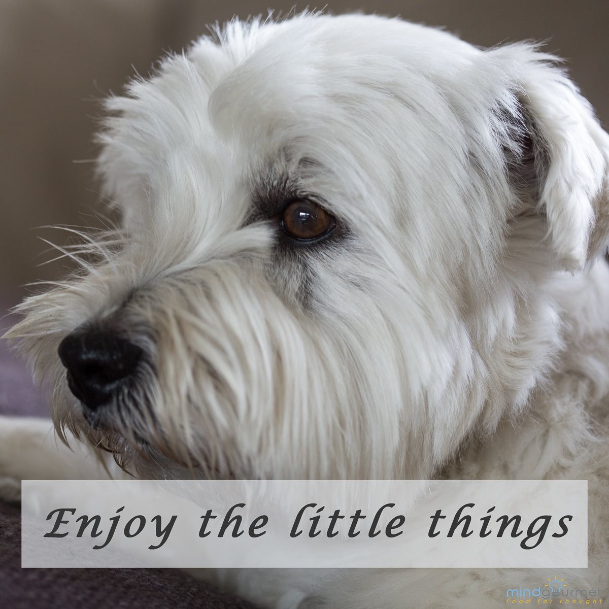Enjoy the little things! #enjoy #quote #grateful<br>http://pic.twitter.com/GiwzGFeS0U