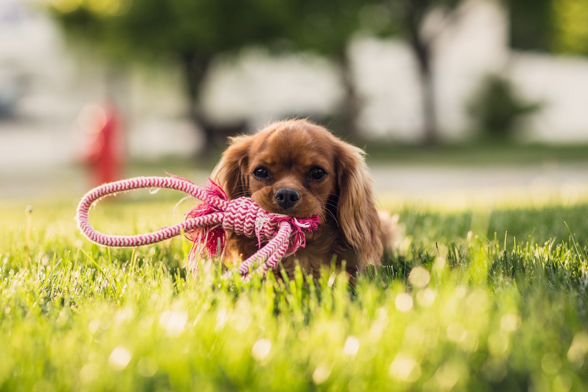 How to help your dog cope in the heat ht...