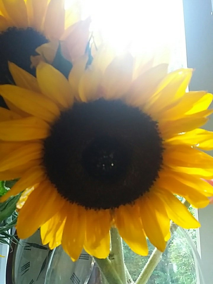 For everyone who had a tough week, it&#39;s Friday now  #wellbeing #weekend #sunshine #hope #sunflowers @SharedMotivati1<br>http://pic.twitter.com/Fxszh2z3vz