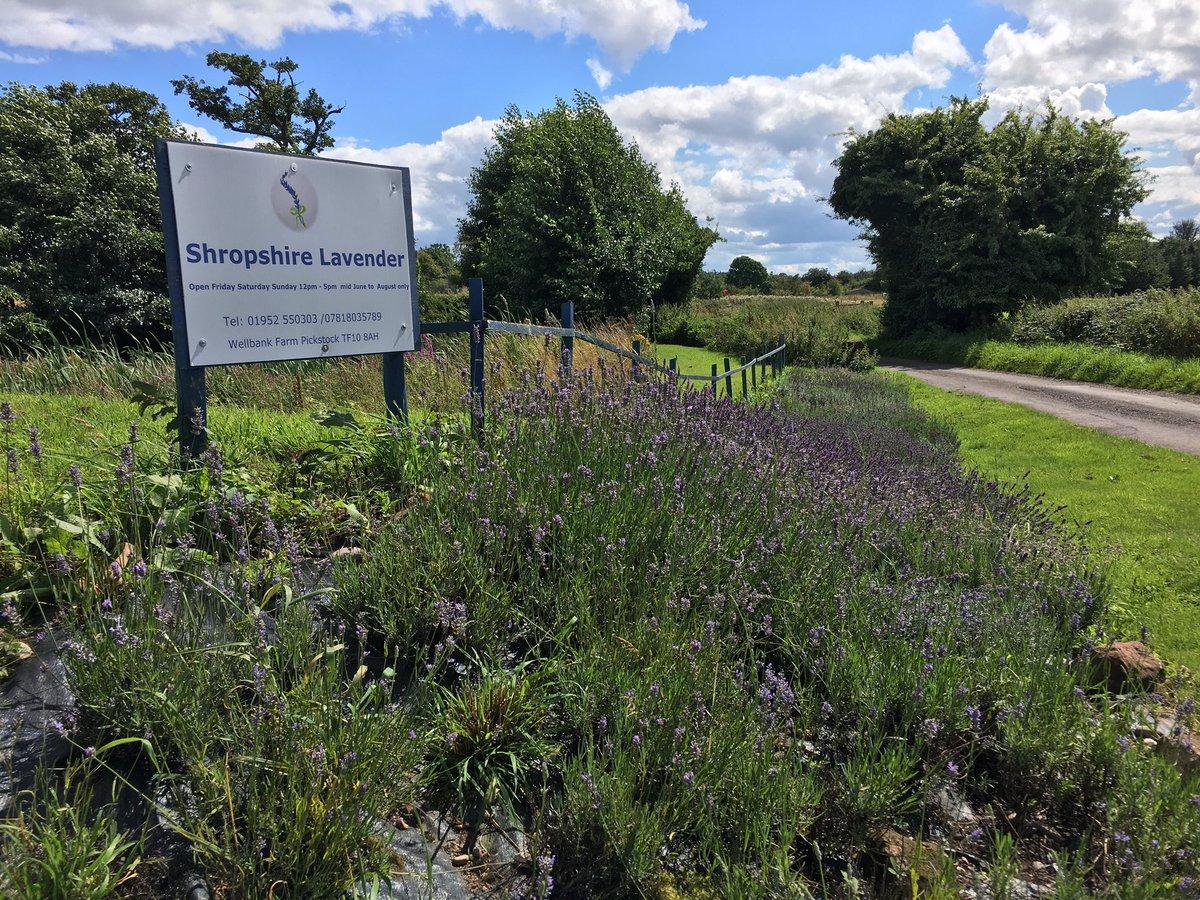 #lavenderfarm #visit? Fri-Sun 12-5.00pm #Shropshirelavender! #beautiful #lavender #delicious #teagarden #kids #activities #giftshop RELAX<br>http://pic.twitter.com/g2o5AebRJW