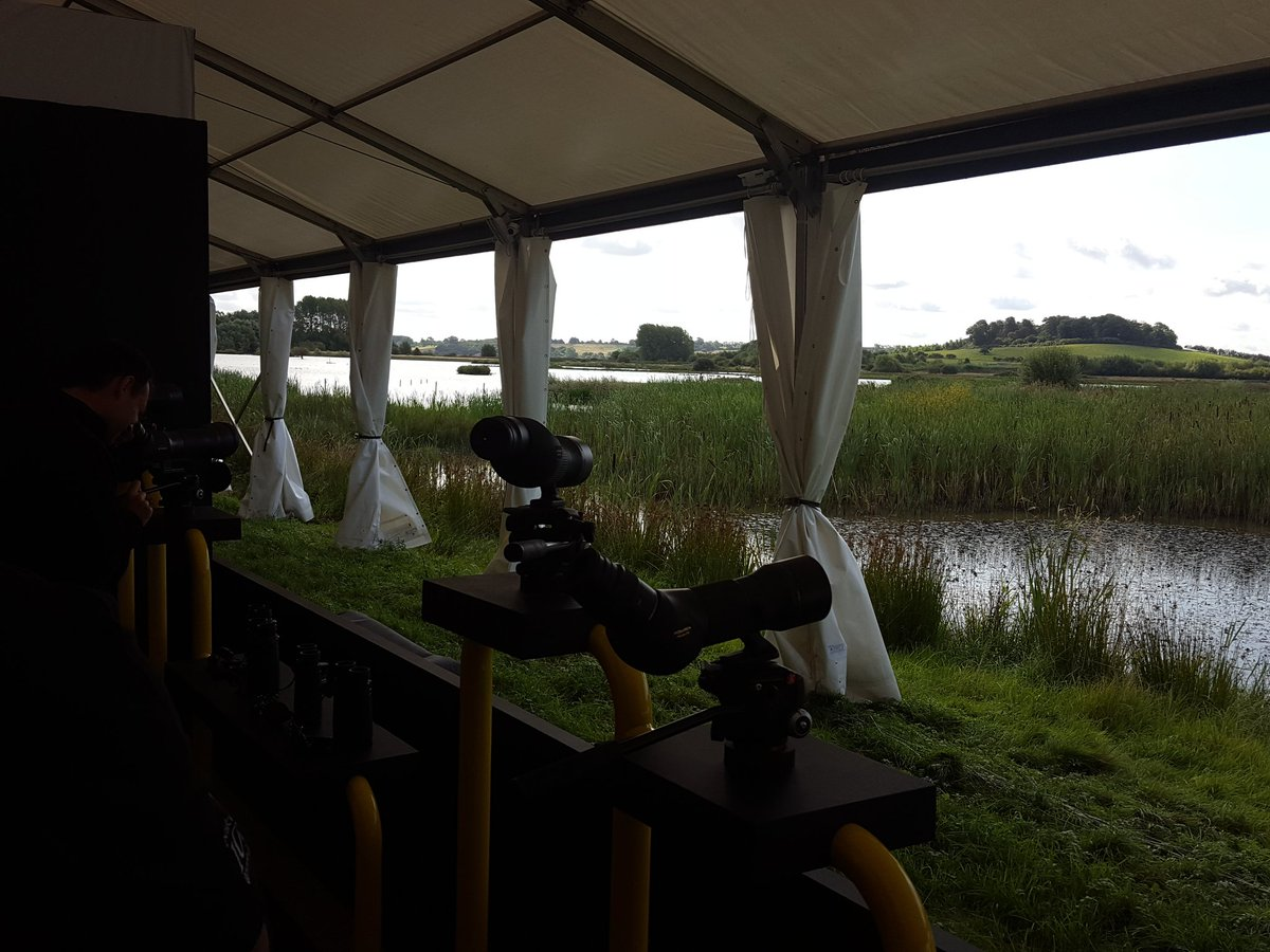 Great White Egret just flown in at #nikon stand at #birdfair @TheBirdfair<br>http://pic.twitter.com/1PItz5LGeJ