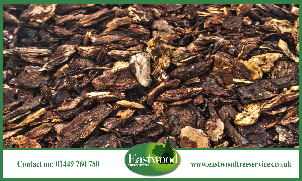 Click here to like us on Facebook &gt;&gt;&gt;  http:// bit.ly/EastwoodTreeSe rvicesFacebook &nbsp; …  #Eastwood #TreeSurgery #Arborists<br>http://pic.twitter.com/5dBS52P9M2