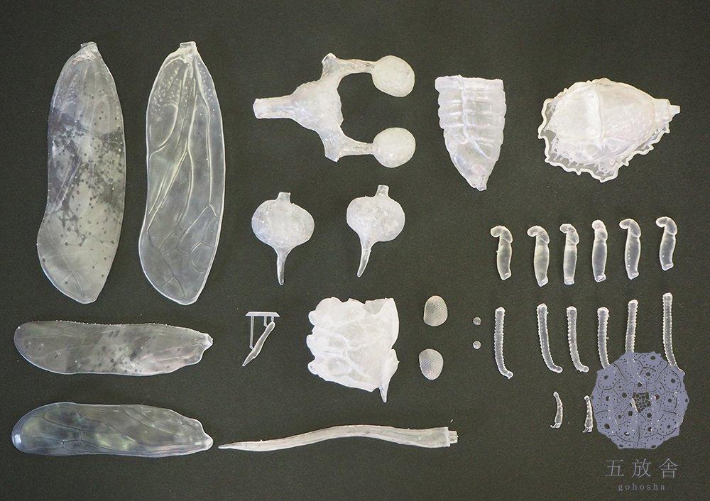 制作にはデジタル造形ソフトZBrushを使用。Form2という3Dプリンターで出力した後に手作業で塗装と植毛を行いました。 #九州大学 #九大 #昆虫 #九州大学総合研究博物館 #福岡 #form2 #ZBrush