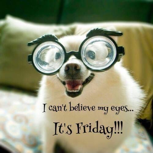 Happy #Friday! Paws up if you&#39;ve got the #FridayFeeling<br>http://pic.twitter.com/CBsSdtzvsL