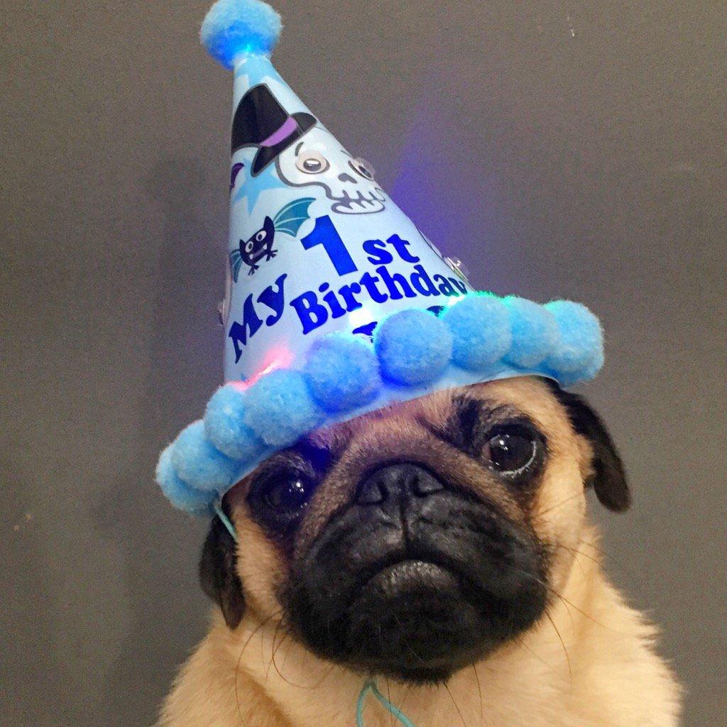 HAPPY 1st BIRTHDAY Zombie!!!!  #loveyabro  #pug #party #birthday #puppy #ldnont #celebrate<br>http://pic.twitter.com/PBYCZ367J7