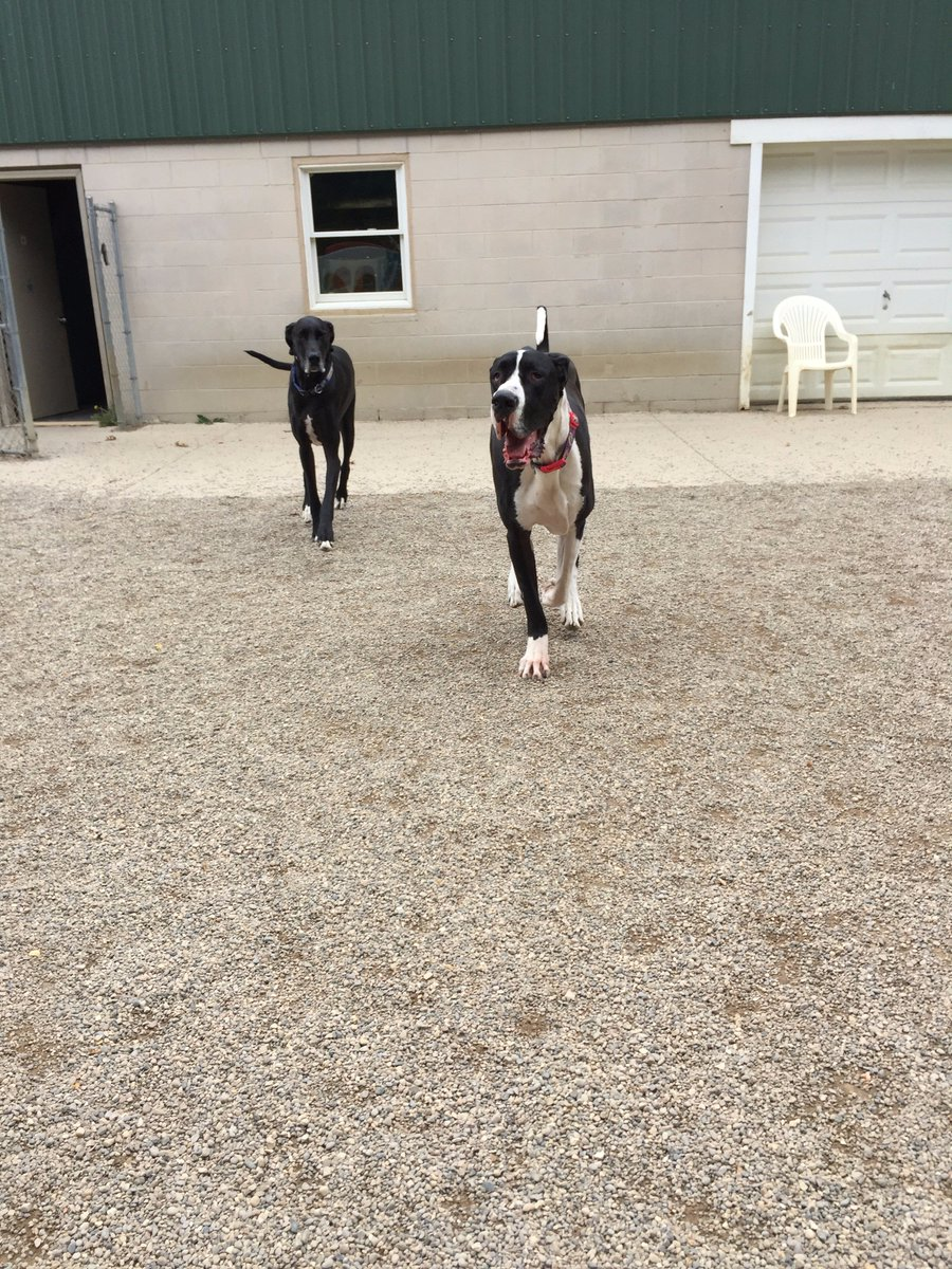 Zues and Loki come racing in!