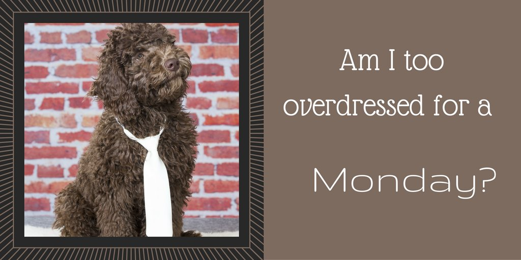 I think I over did it for the office today @trendypet? #mondayblues #d...