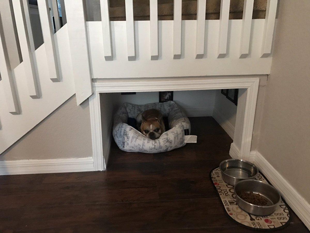 1144 am 18 aug 2017 - Flooring For Dog Room