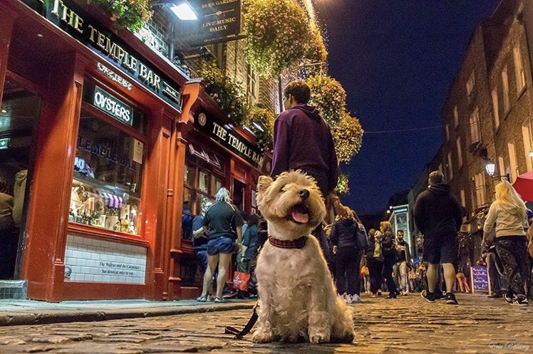 Happy dog  Who else going to Temple bar tonight .  by IG:eric_dublin #templebar #friday #dog #dublin #ireland #irish_daily #500pxrtg<br>http://pic.twitter.com/Ofjvw6ieHU