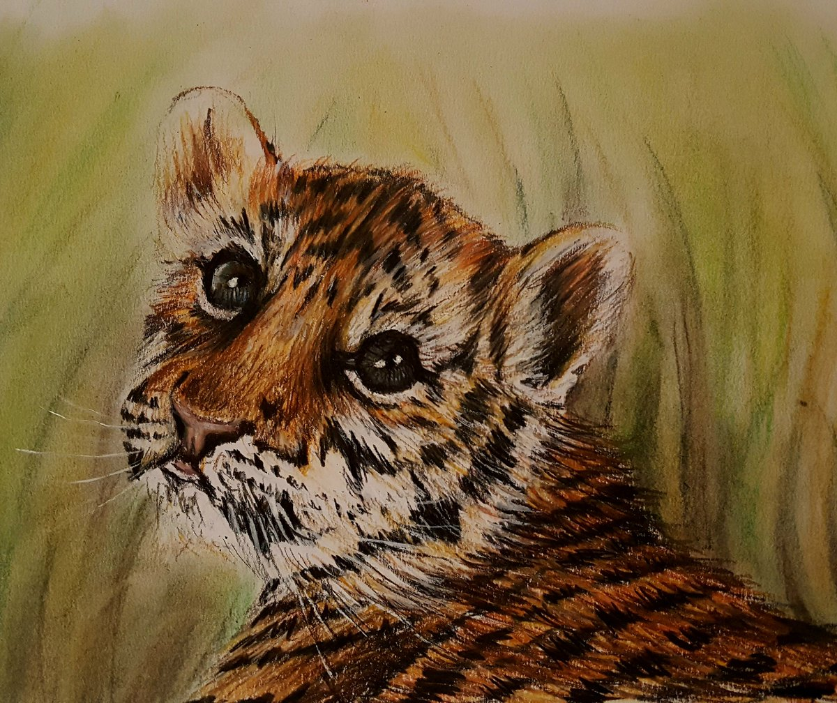 Just finished this little #tiger a #drawingaugust in #colourpencils #FridayFeeling #twitart #dailysketch<br>http://pic.twitter.com/aoUjthXOd1