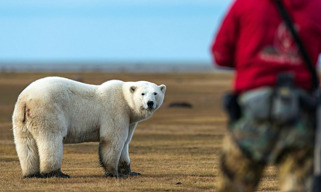 Become a Certified #PolarBear Whisperer ~ Special Workshop by Nikita Ovsyanikov at #Wolf &amp; #Carnivore #Conference!   http://www. churchillwild.com/become-a-certi fied-polar-bear-whisperer/ &nbsp; … <br>http://pic.twitter.com/8mPhdwZW2F