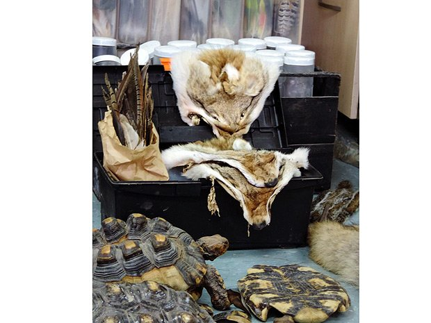 Crime e crueldade: Ibama apreende no Rio animais e partes de bichos usados em rituais https://t.co/mYV36EAXdp