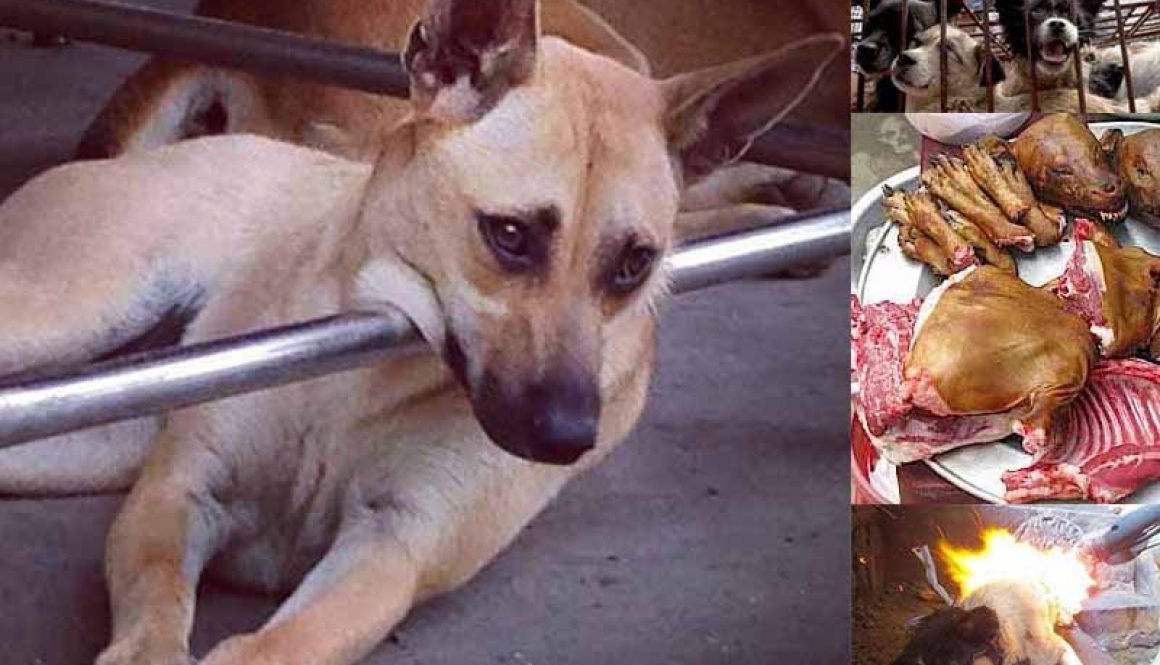 #Done for.. a beautiful stolen pet ..this is #china today.. she was skinned and boiled alive, her skin was turned into leather sold to you.<br>http://pic.twitter.com/OCeDh4PSAX