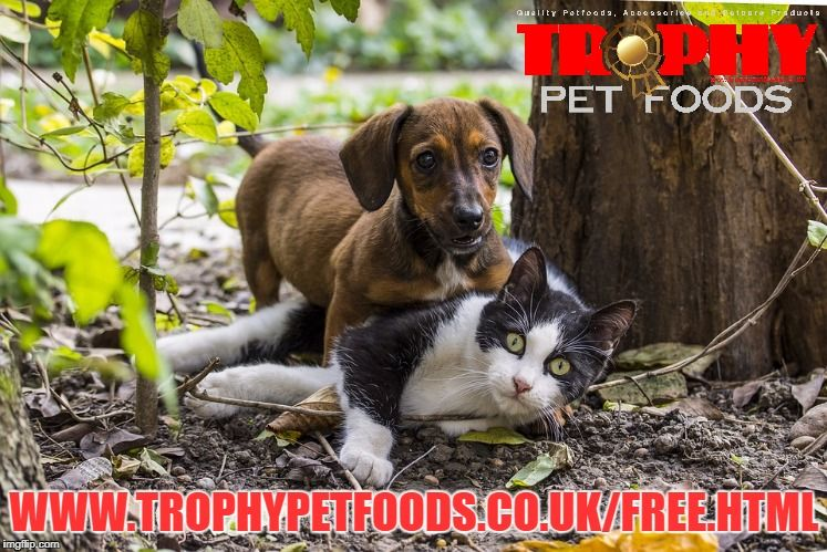 Your one stop pet shop - Trophy Wirral! #local #freedelivery #petfoods<br>http://pic.twitter.com/ovWbsSLgKW