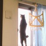 猫背って一体何だろうこんなに背筋のピンとした猫は見たことない