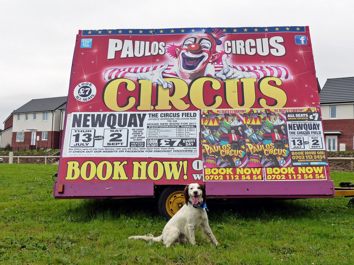They might tour the UK but @ThePaulosCircus is run by a #local Newquay family. Also Britain&#39;s oldest family circus... well worth a visit. <br>http://pic.twitter.com/oTRXnuPAdh