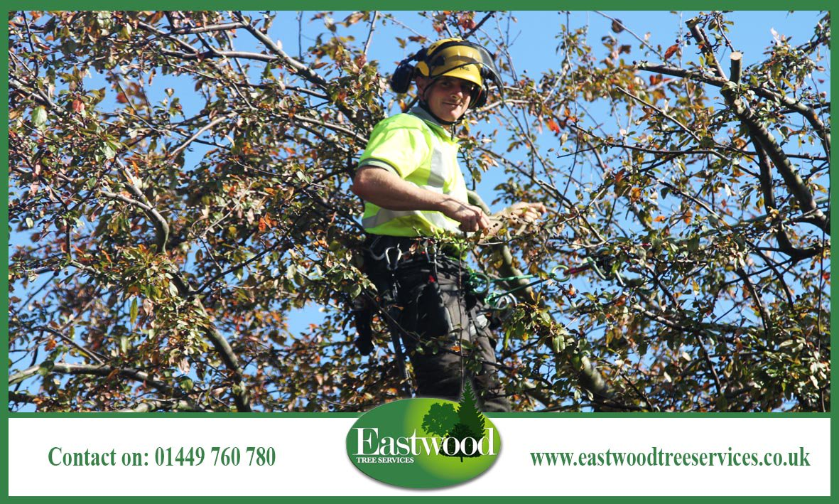 Check out these pics of our team hard at work &gt;&gt;&gt;  http:// bit.ly/EastwoodTreeSe rvicesGallery &nbsp; …  #Eastwood #TreeSurgeons<br>http://pic.twitter.com/Lyox4b6RIU