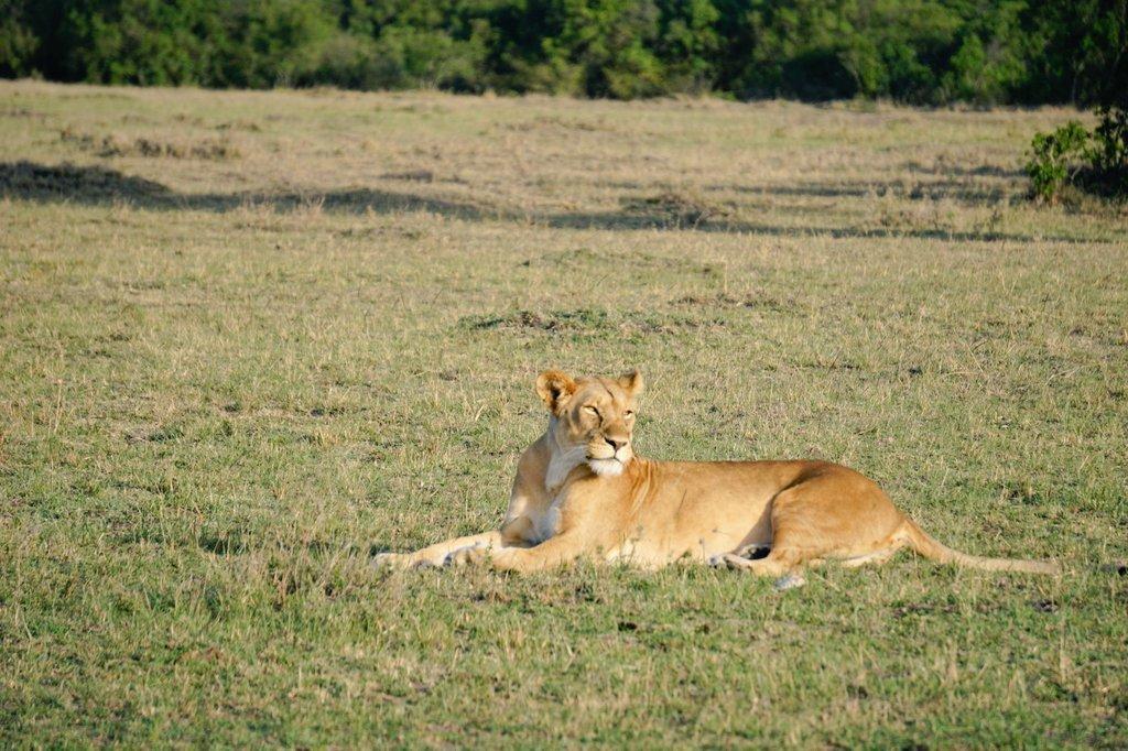 More pics from my afternoon game drive in #MasaiMara w/ @MaraFairmont. #LuxuryTravel #Kenya #FairmontSafari #Safari <br>http://pic.twitter.com/x2dwR2ZICY