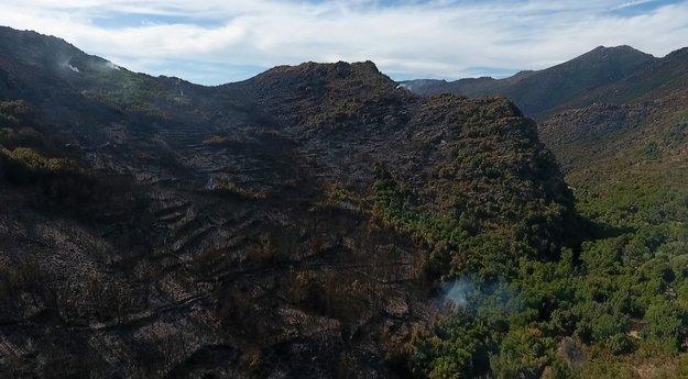 #Incendie du Cap-#Corse : la chambre d'agriculture établit un diagnostic  http:// sur.corsematin.com/AD6m-8v9G    pic.twitter.com/o6sVhza1dV