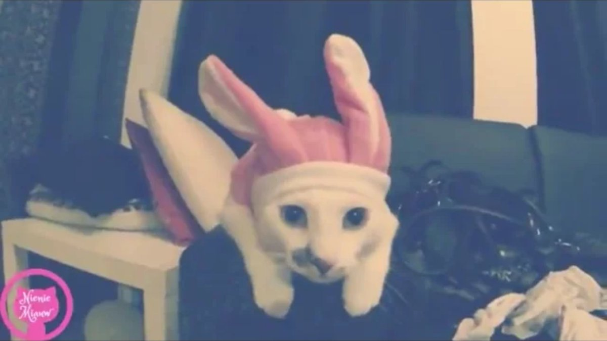 My cat is a bunny! Watch this super cute video!   https:// youtu.be/N1VPtiYw9_M  &nbsp;   #Cats #Bunny #Cute #YouTuber #smallyoutuber<br>http://pic.twitter.com/6rerONwyKG