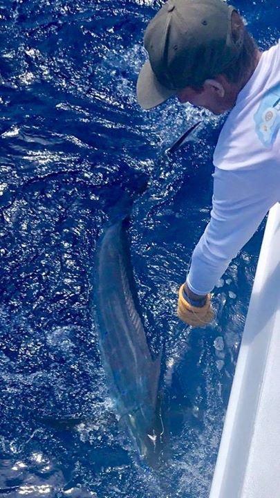 Kona, HI - Night Runner released a Blue Marlin and a Sailfish.