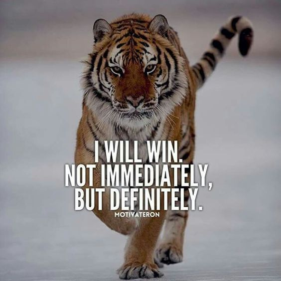 Never surrender. It will all pay off.  #fighter #tiger #success #motivation #entrepreneur #boss #amwriting #motivation<br>http://pic.twitter.com/eCrN23pocN