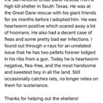 This is Norman puppy stories