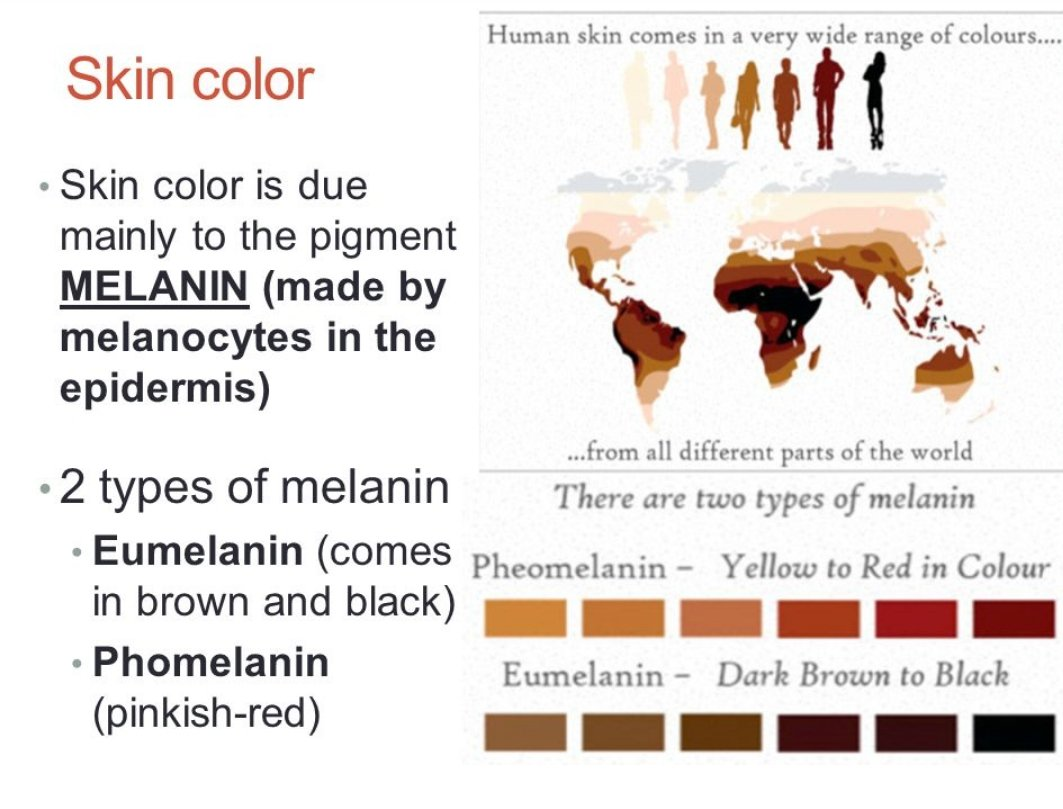 melanin what makes black pdf