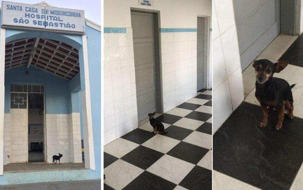 Cãozinho tenta acompanhar idosa doente e fica em porta de hospital durante três dias na Bahia https://t.co/V45Fi2TMLv #G1