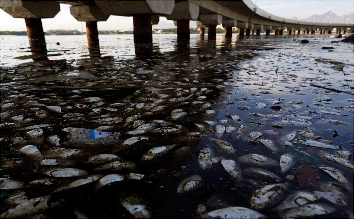 What causes Ocean &quot;Dead Zones&quot;? #ecology #Science AP  https://www. scientificamerican.com/article/ocean- dead-zones/ &nbsp; … <br>http://pic.twitter.com/gemkOzU15A