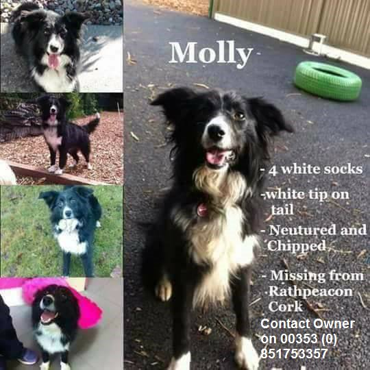 #MOLLY STILL MISSNG!! RT TO HELP FIND HER! #rathpeacon #mallow #road #cork #someone #knows #where #MOlly is<br>http://pic.twitter.com/nZR95wgMO8