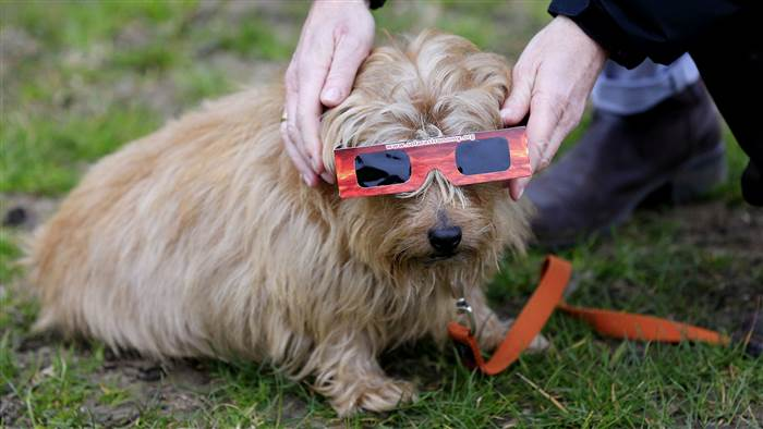 How to keep your pets safe during the solar eclipse https://t.co/JDA9UTYGvA via @TODAYshow