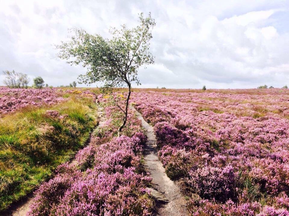 Likewise in #Calderdale #WestYorkshire @bbcsomerset @ExmoorSRT @ExmoorNP<br>http://pic.twitter.com/XmNPyXK4NY