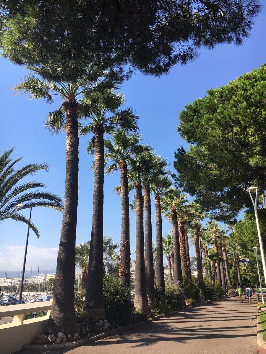 A pleasant sunday in #Cannes  sur la #Croisette #PortCanto  #CotedAzurFrance  @lucb067 @Sandra_Sanchez6 @Yann_Lerat<br>http://pic.twitter.com/rXM1LPOA0e