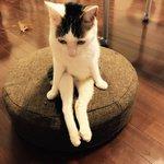 猫の座ってる姿に驚きもしかして中に人間が入ってるんじゃないの?